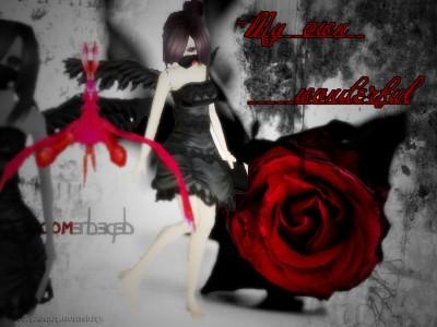血色玫瑰 从  lycoris